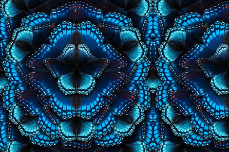 Blue Butterfly Mandala fabric by jenithea on Spoonflower - custom fabric