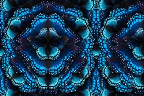 Blue Butterfly Mandala fabric by jenithea on Spoonflower - custom fabric