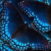 Rbluebutterflies1_simpler2_shop_thumb