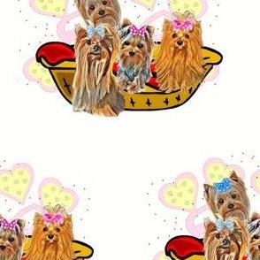Yorkie valentin family