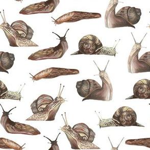 Snails and slugs white