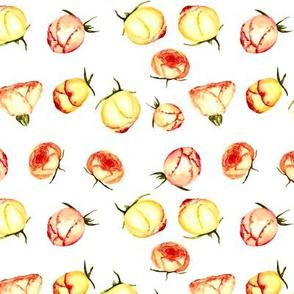Watercolor rose buds