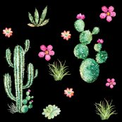 Rrcactus_candy_in_black_shop_thumb