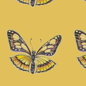 Yellow_and_brown_butterfly_s_shop_thumb