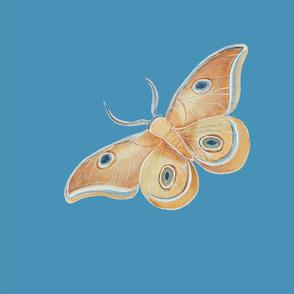 Polyphemus_blue