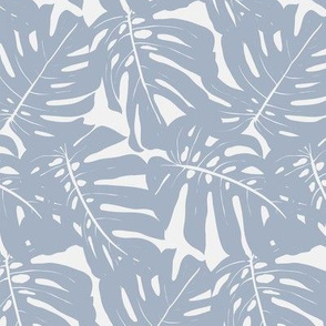 monstera plant leaves in greyish blue color