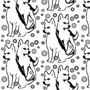 white_huskies