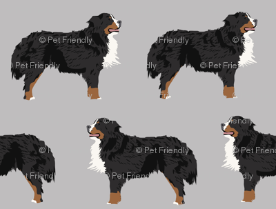 bernese mountain dog fabric bernese mountain dog dog breed design dog breed fabric dogs cute dog design best dog pet dog fabric