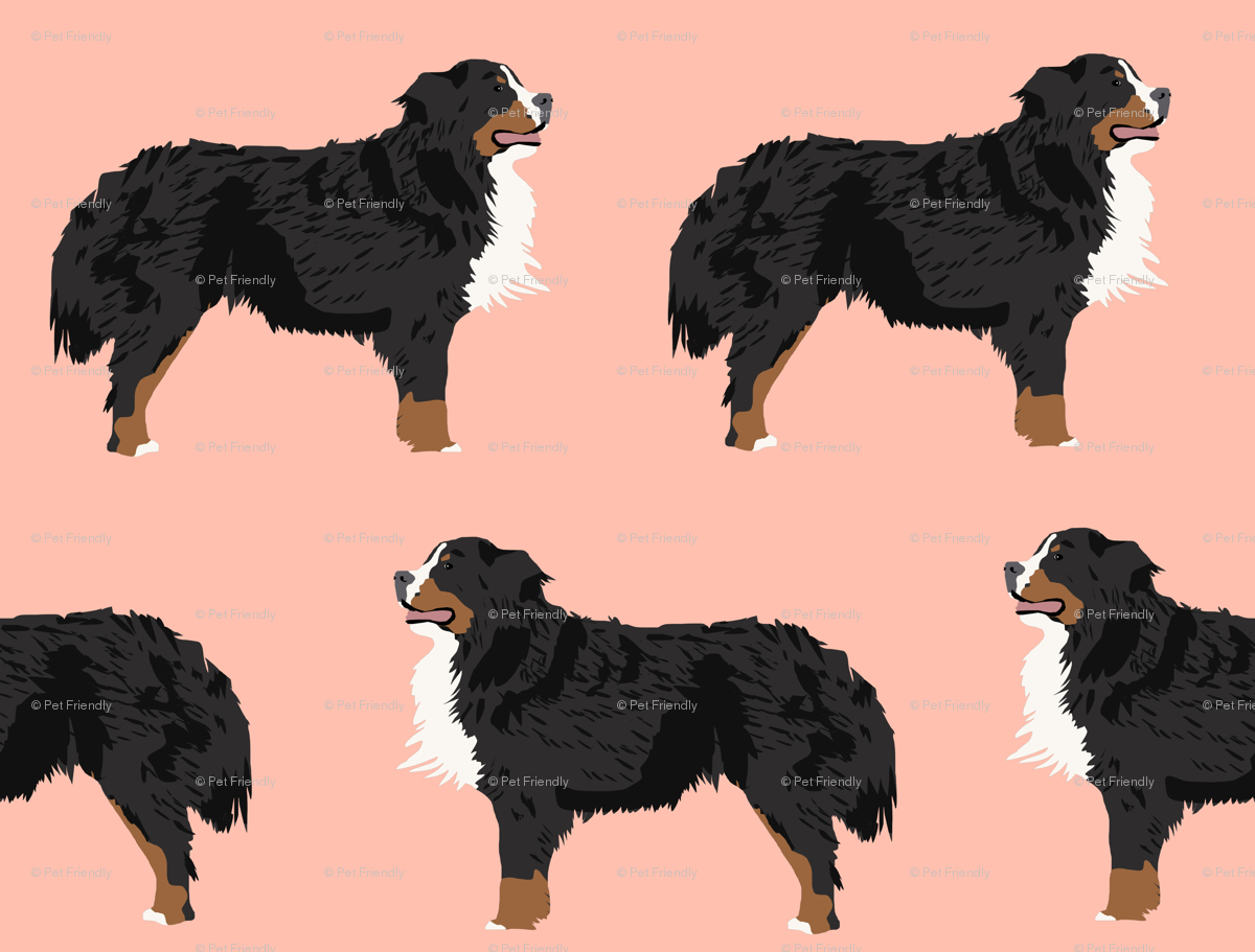 Good Bernese Mountain Dog Chubby Adorable Dog - rbmd_peach_highres  Snapshot_676817  .png