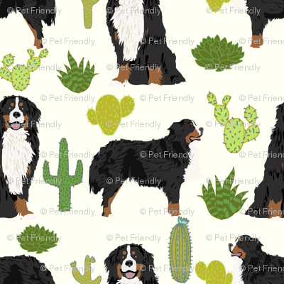 Most Inspiring Bernese Mountain Dog Chubby Adorable Dog - rbmd_cactus_cream_preview  Gallery_277966  .png