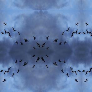 seagulls_1_8x8
