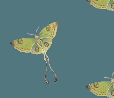 Luna Moth Teal background fabric by jenoiserie on Spoonflower - custom fabric