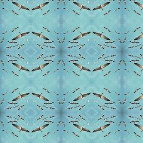 8_pacific_gulls_8x8