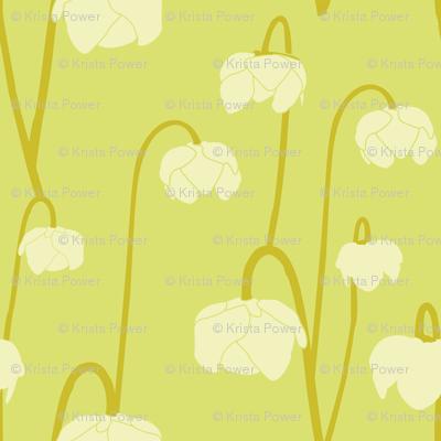 pitcherplantcitron