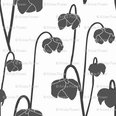 pitcherplantgrey