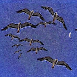 pacific_gulls_