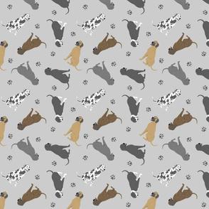 Tiny Great Danes - gray