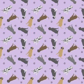 Tiny Great Danes - purple