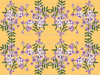 2941 Boronia#1-Yellow