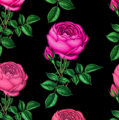 Redoute_rose/ Pink Rose Botanical Art