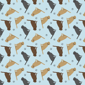 Tiny Labrador Retrievers - blue