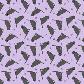 Tiny Black Labrador Retrievers - purple