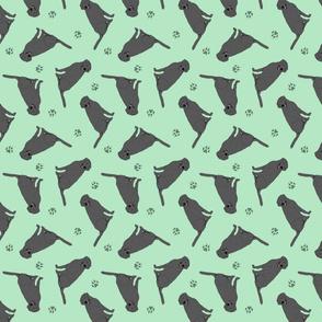 Tiny Black Labrador Retrievers - green