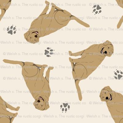 Tiny Yellow Labrador Retrievers - tan