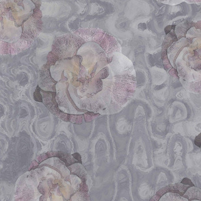Californian Poppy 'Ballerina Pink'  on Watercolour soft