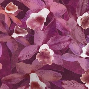 Nui Cattleya Orchids Plum 150