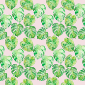 Tropical Leaves on Pink