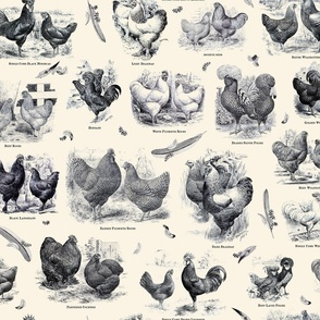 Poultry Envy Cream Black Toile