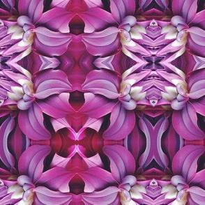 purple_dahlia