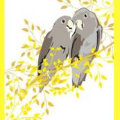 Grey Parrots in yellow