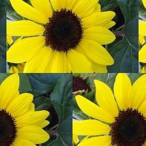 Sun's flowers