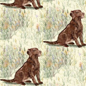 Chocolate Lab sitting in wildflowers