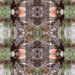 Baby Tree Toad Mushroom House