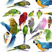 Parrots everywhere