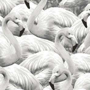 Flamingo // Black and White
