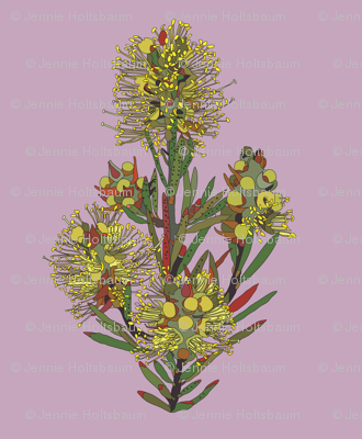 2941 Lemon Bottlebrush#1-Mauve