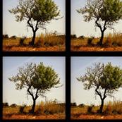 The loneliest tree.