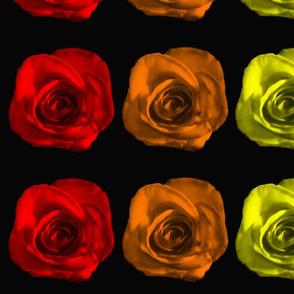 Rainbow Roses on Black