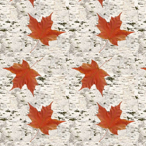 birch_bark_with_maple_leaves_-_spoonflower