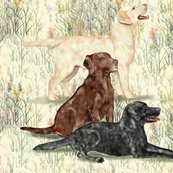 Rrrrchocolate_yellow_and_black_lab_in_wildflowers_2_shop_thumb