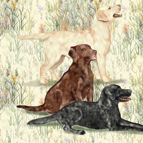 Chocolate Yellow and Black Lab in Wildflowers_2