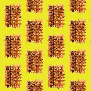 Shaggy Dog Rugs on Lemon Zest