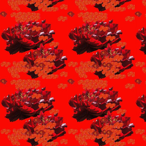 Crimson_Peony_Floating_Zinnia