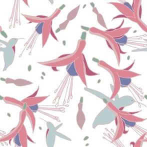 Fuchsia_Hummingbird_white