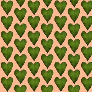 leaf heart tropical