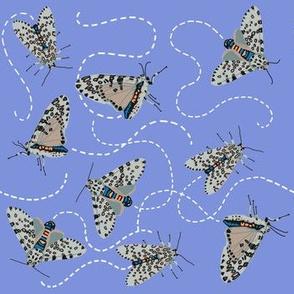 leopard moth buzz [peri]